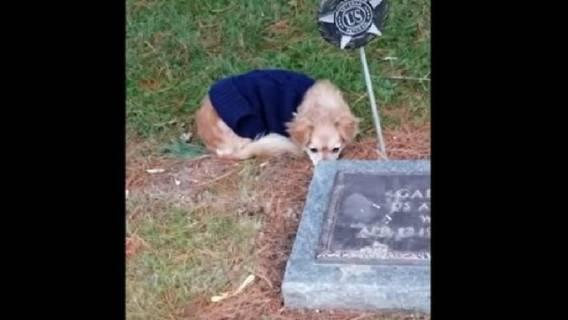 pies nagranie grób cmentarz