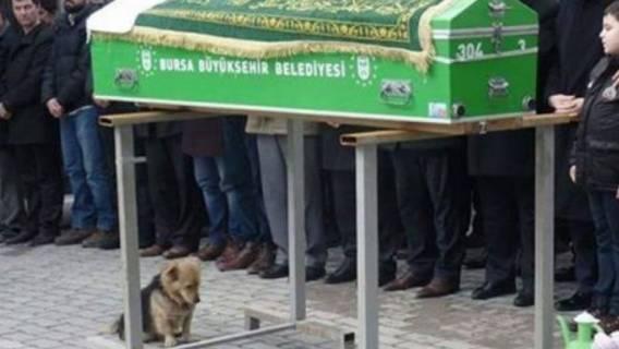 pies pogrzeb cmentarz