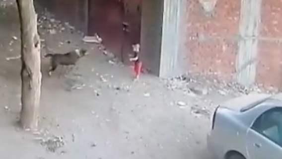Pis rzucił się na dziecko