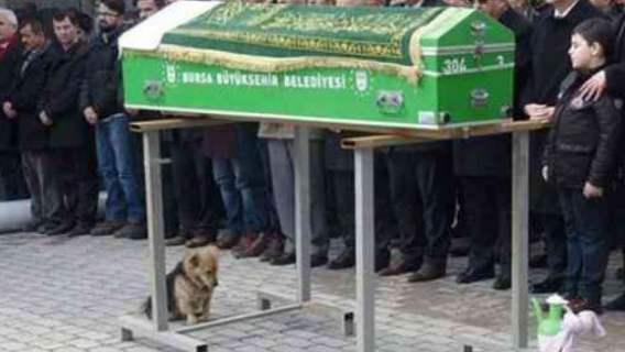 Pies na pogrzebie