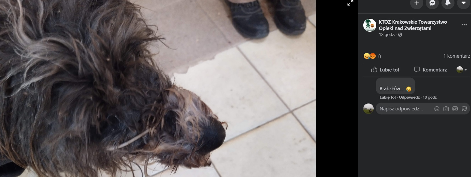 Pies został bezlitośnie potraktowany przez właściciela