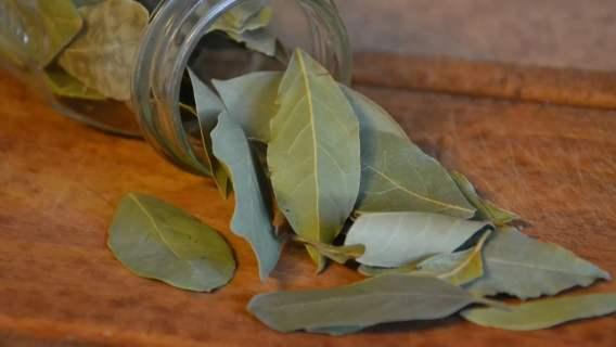 Domowe triki - -liść laurowy