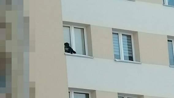pies został wystawiony za okno