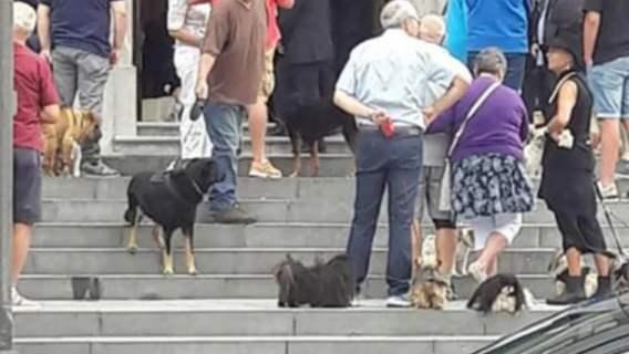 Psy na pogrzebie weterynarza